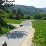 Paradise Road Downhill (zwischen Nürnberg und Bayreuth)