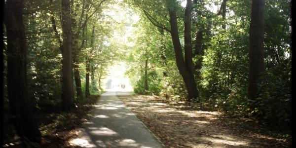 longboard-strecke-berlin-pfaueninsel-7