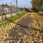 Von Düren nach Köln